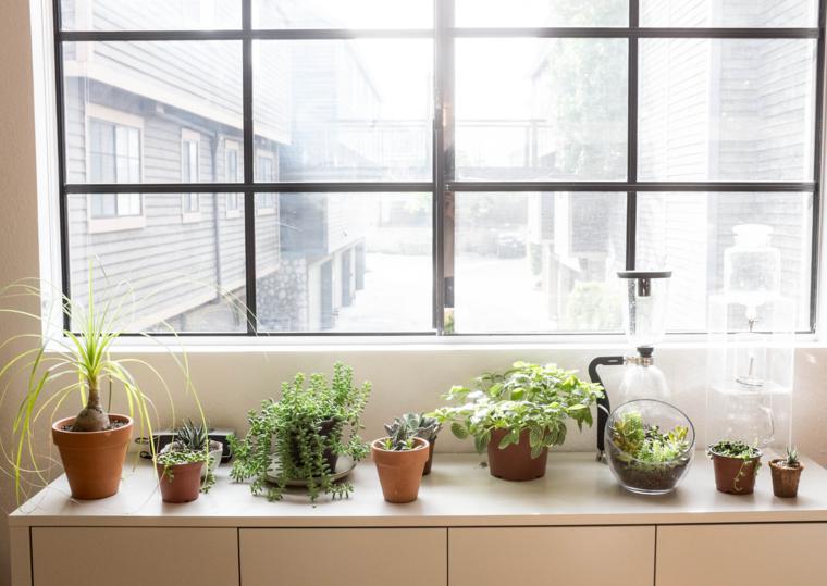 5-errores-plantas-interior-gardeneas-temperatura