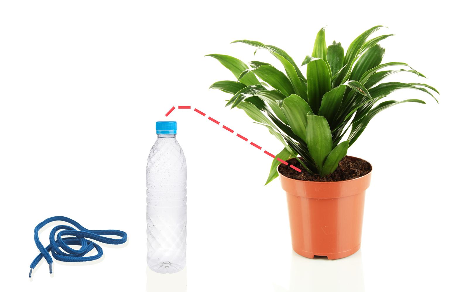 5-errores-plantas-interior-gardeneas-riego