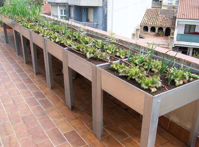 guía-huerto-urbano-balcón-gardeneas