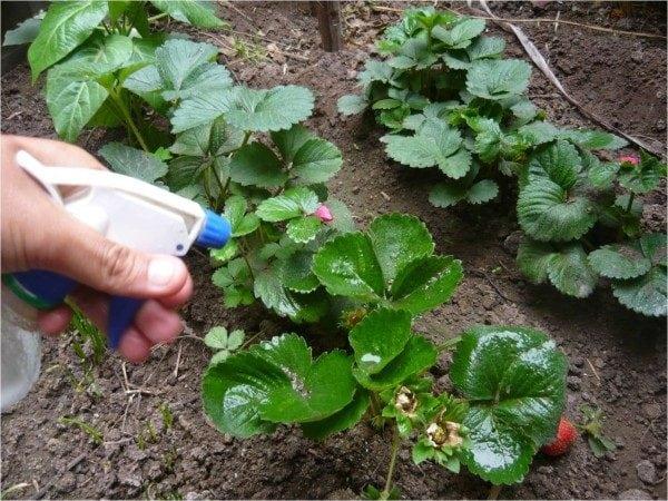 hongos-que son-eliminarlos-gardeneas-aerosol