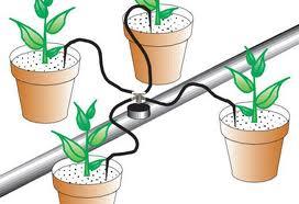 instalar-riego-goteo-gardeneas