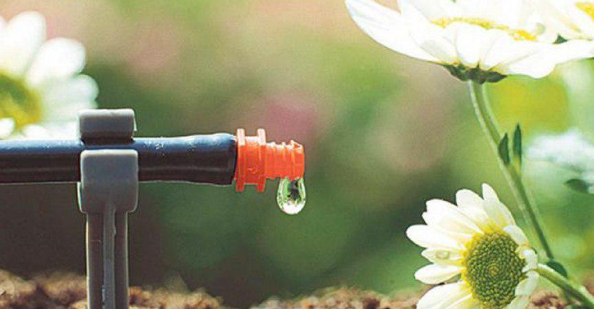 Cuidados del jardin en verano gardeneas for Cuidados del jardin
